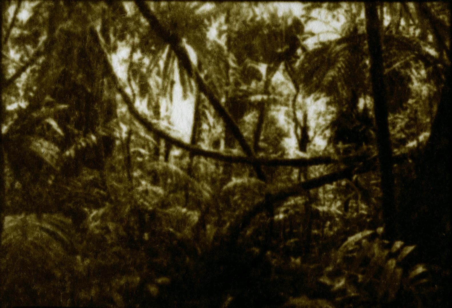 jungle-lianes